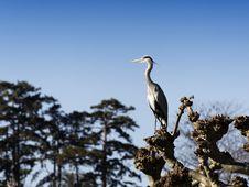 Free Heron Stock Photos - 18288153