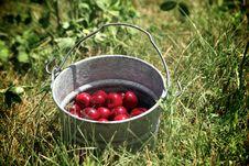 Bucket Of Cherries Stock Photography