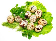 Quail Eggs With Fresh Salad, Fennel And Parsley Stock Photography