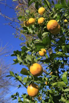 Free Orange Royalty Free Stock Images - 18290019