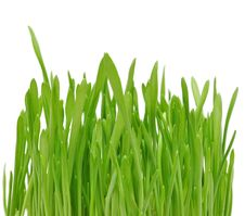 Free Green Grass Stock Photo - 18290130