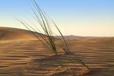 Free Life Beginning In The Desert Royalty Free Stock Image - 18290666