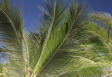 Free Palm Tree Detail Royalty Free Stock Photos - 18290698