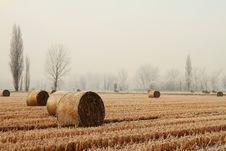 Hay Bales In A Wheat Field Stock Image