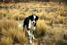 Free Dog In Field Stock Photography - 18292452