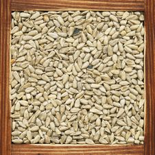 Free Sunflower Seeds Stock Photo - 18292640