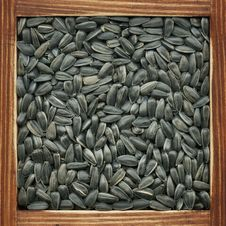 Free Sunflower Seeds Royalty Free Stock Photography - 18293027