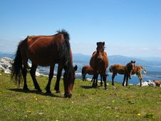 Horses Grazing On A Hill Stock Image