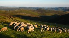 Free Flock Of Sheeps Mountains In Sunset Hour Royalty Free Stock Images - 18293449