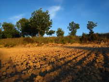 Free Furrows Plowed Into A Dirt Field Royalty Free Stock Photo - 18293455