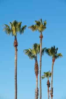 Free Palm Trees With Blue Sky Stock Images - 18294214