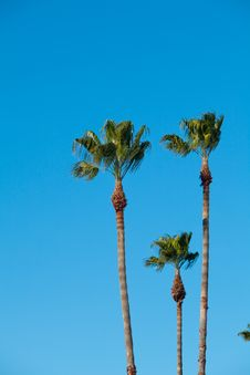 Free Palm Trees With Blue Sky Royalty Free Stock Photos - 18294228