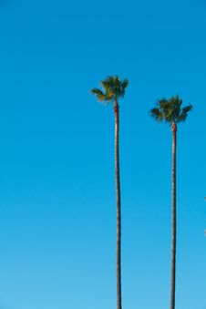Free Palm Trees With Blue Sky Royalty Free Stock Photography - 18294267
