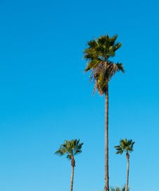 Free Palm Trees With Blue Sky Royalty Free Stock Photography - 18294277