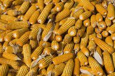 Free Corns Royalty Free Stock Image - 18294426