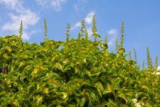 Free Coleus Plants Stock Image - 18295401