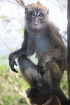 Free Monkey On Natural Background Stock Photo - 18295900