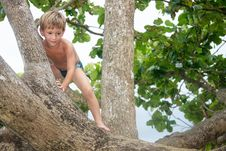 Free Cute Boy On A Tree Stock Photos - 18296963