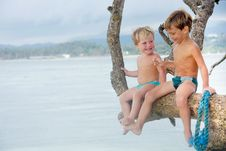 Free Two Children On Tree Stock Photo - 18297170