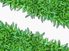 Free Green Grass Isolated On White Royalty Free Stock Images - 18297789