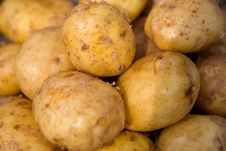 Free Young Potatoes Royalty Free Stock Photo - 18298925