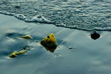 Free Kelp In Black Sand Stock Images - 18299154