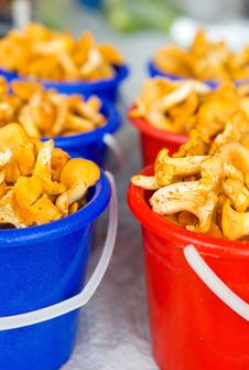 Free Chanterelle Mushrooms In Buckets Royalty Free Stock Photos - 18299368