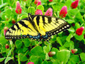 Free Butterfly7 Stock Photography - 1835512