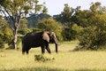 Free Elephant Stock Images - 1837274