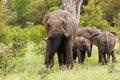 Free Elephant Royalty Free Stock Image - 1837276