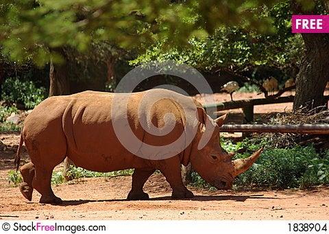 Free White Rhino Stock Images - 1838904