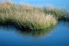 Free Grass Reflection 01 Royalty Free Stock Photo - 1831605