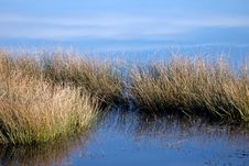 Free Grass Reflection 02 Royalty Free Stock Photo - 1831615