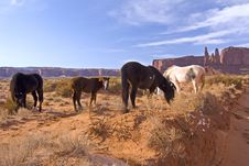 Free Horses Grazing In Monument Valley Stock Photography - 1831672