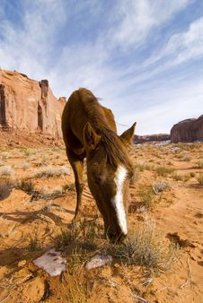 Free Horse Monument Valley Royalty Free Stock Photos - 1831748