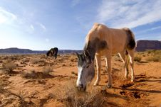 Free Monument Valley White Horse Royalty Free Stock Photos - 1831788