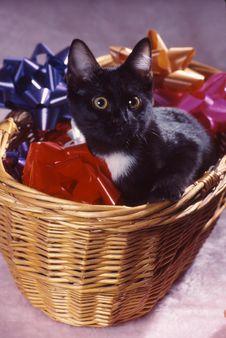 Free Tiger In Basket 3 Stock Image - 1834841