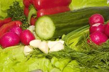 Free Spring Vegetables Stock Photography - 1835362