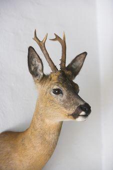 Free Deer Royalty Free Stock Images - 1837149