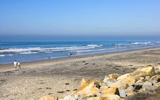 Free Torrey Pines Beach, California Stock Images - 1837434