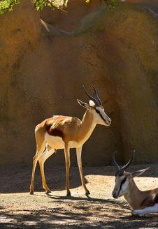 Free Deer Stock Photos - 1837653