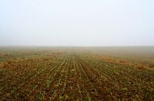 Free Rural Area In Mist Royalty Free Stock Photos - 1837758