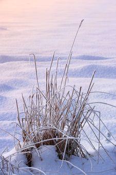 Free Warm Winterday Royalty Free Stock Photos - 1837808