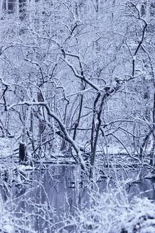 Free Frozen Blue Swamp Stock Image - 1838891