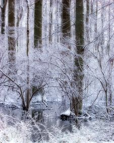 Snowy Swamp Royalty Free Stock Photos