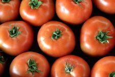 Free Tomatoes Royalty Free Stock Photo - 1839205