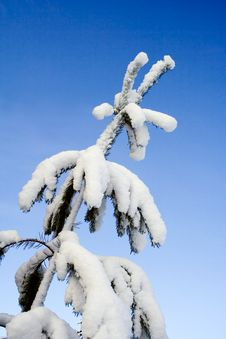 Free Heavy Snow Stock Images - 1839294