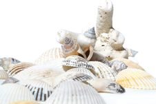 Free Coral And Cockleshells Royalty Free Stock Images - 1839739