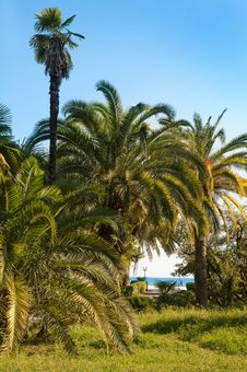 Free Palm Trees In Subtropics. Royalty Free Stock Image - 18300376