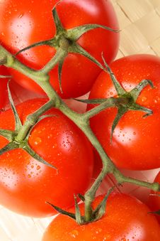 Free Ripe Tomato Branch Royalty Free Stock Photography - 18300597